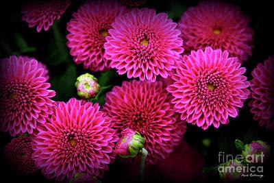Photograph - Mums For You Flower Garden Art by Reid Callaway