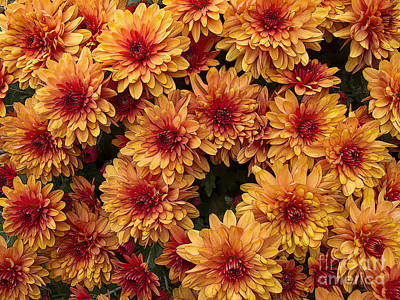Thomas Kinkade Rights Managed Images - Mums the Word Royalty-Free Image by Ann Horn