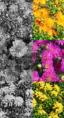 Photograph - Mums The Word by Kristie  Bonnewell