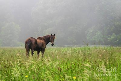 Photograph - Munching Grass by Joann Long