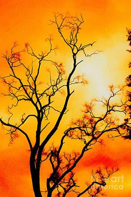 Photograph - Mundaring Weir Tree I by Cassandra Buckley