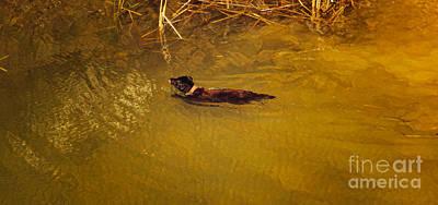 Photograph - Mundaring Weir V by Cassandra Buckley