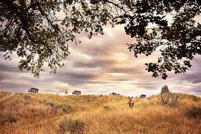 Photograph - Munson Morning by John Poon