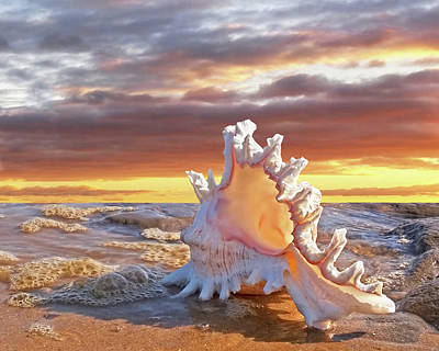 Photograph - Murex Seashell Sunset by Gill Billington