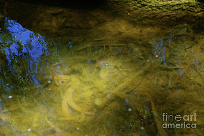 Photograph - Murky Waters by Tracey Everington