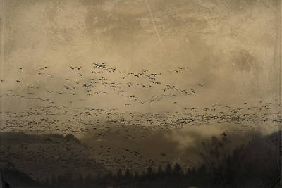 Photograph - Murmuration 1 by Theresa Pausch