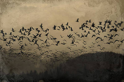 Photograph - Murmuration 2 by Theresa Pausch