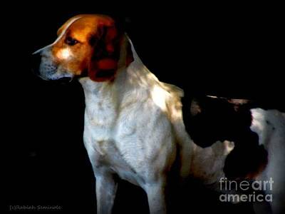 Photograph - Murphy by Rabiah Seminole