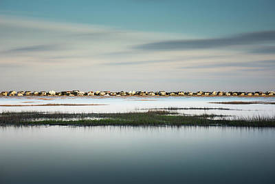 Marsh Photograph - Murrells Inlet Marsh by Ivo Kerssemakers