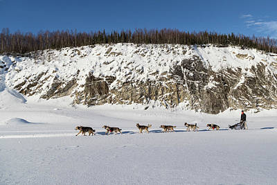 Photograph - Musher And Dog Team by Scott Slone