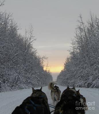 Mushing Into The Sunset Art Print by Tanja Hymel