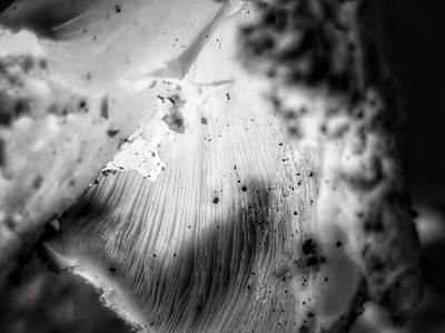 Photograph - Mushroom 1 by Adam Vance