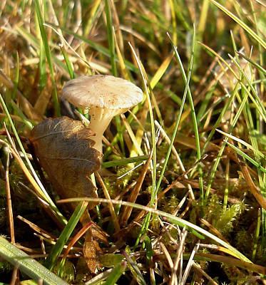 Mushroom And Leaf Art Print