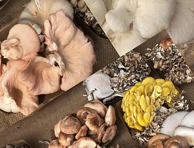 Photograph - Mushroom Art by Arlene Carmel