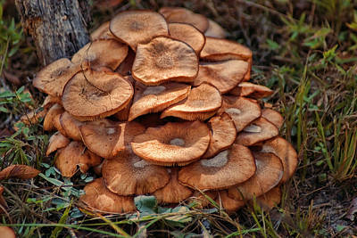 Photograph - Mushroom Bouquet by Rick Friedle