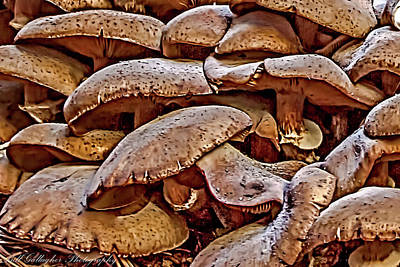 Photograph - Mushroom Colony by Bill Gallagher