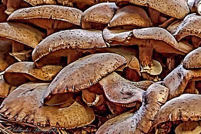 Mushroom Colony Art Print
