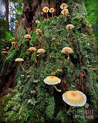 Photograph - Mushroom Colony by Martin Konopacki