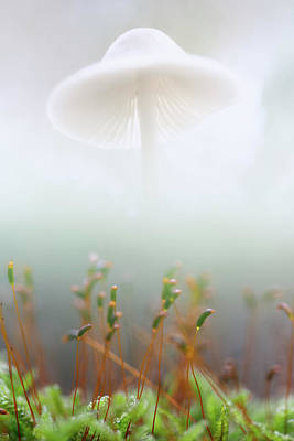 Mushroom Dreams, Mycena Galericulata Art Print by Dirk Ercken