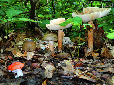 Photograph - Mushroom Family by Raymond Salani III