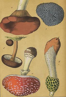 Mushroom Fly Agaric Truffle Art Print