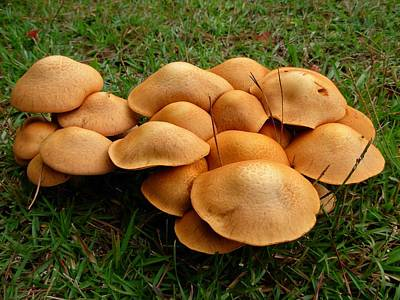 Photograph - Mushroom Gathering by Jeanne Kay Juhos