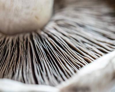 Photograph - Mushroom by Giles PichelJuan