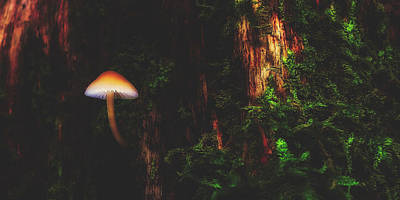 Photograph - Mushroom In Forest by Pixabay