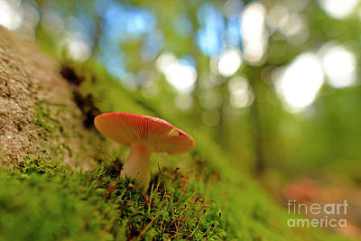 Photograph - Mushroom by Joshua McCullough