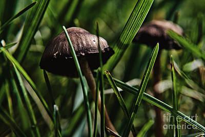 Polaroid Camera - Mushroom Jungle 4 by Pittsburgh Photo Company
