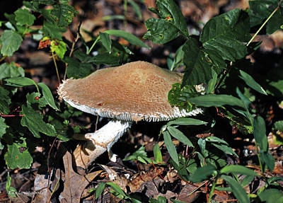 Photograph - Mushroom by Kay Lovingood