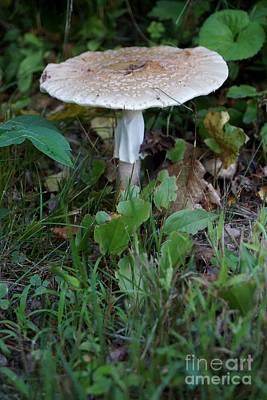 Photograph - Mushroom by Kerri Mortenson