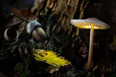 Light Paint Photograph - Mushroom Lantern Enchanted Forest by Dirk Ercken