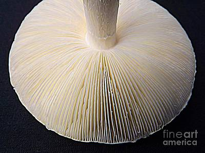 Photograph - Mushroom Macro Expressionistic Effect by Rose Santuci-Sofranko