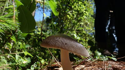 Print featuring the photograph Mushroom by Matthew Bamberg