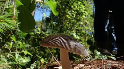 Art Print featuring the photograph Mushroom by Matthew Bamberg