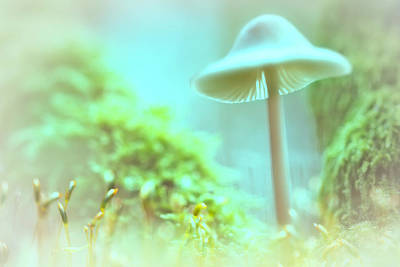 Art Print featuring the photograph Mushroom Misty Dreams, Mycena Galericulata by Dirk Ercken