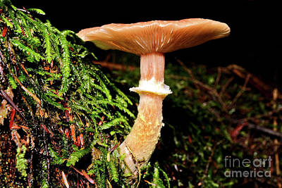 Photograph - Mushroom Photography In Stanley Park 4 by Terry Elniski