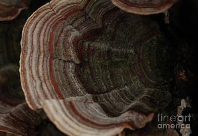 Art Print featuring the photograph Mushroom Shells by Kim Henderson