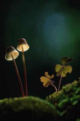 Photograph - Mushroom Twins by Dirk Ercken