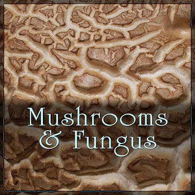 Digital Art - Mushrooms And Fungus by Becky Titus