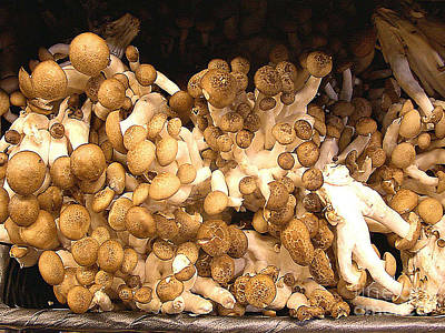 Photograph - Mushrooms - Fungi - For Sale by Merton Allen