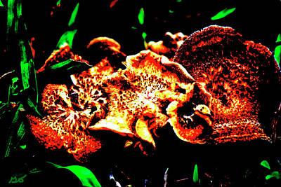 Photograph - Mushrooms by Gina O'Brien