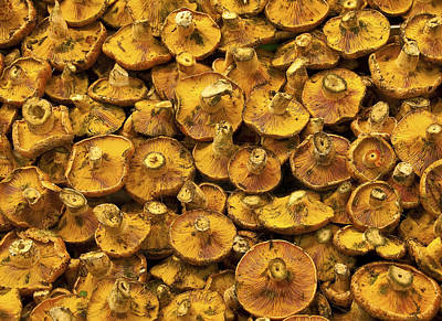 Photograph - Mushrooms In Spain by Steven Sparks