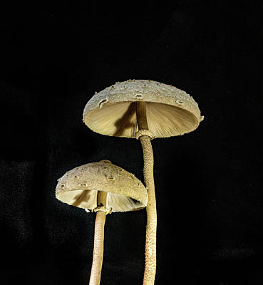Photograph - Mushrooms In The Night by Douglas Barnett