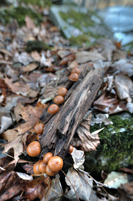 Digital Art - Mushrooms by Patrick Groleau