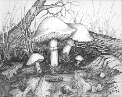 Drawing - Mushrooms -pencil Study by Doug Kreuger