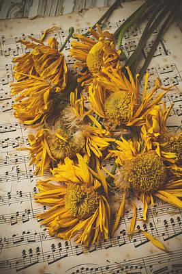 Dappled Light Photograph - Musical Sunflowers by Garry Gay
