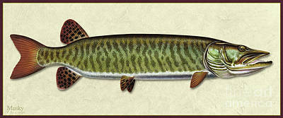 Painting - Muskie Id by Jon Q Wright