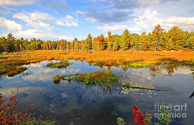 Photograph - Muskoka Fall Colors by Charline Xia